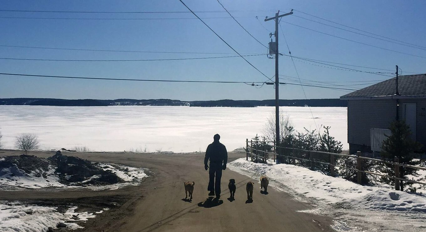 A person and four dogs walking along a road in the winter