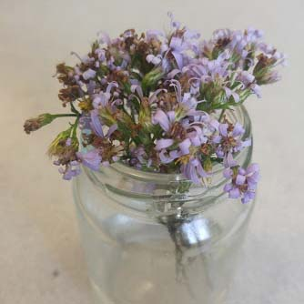 Purple wildflowers in a glass jar